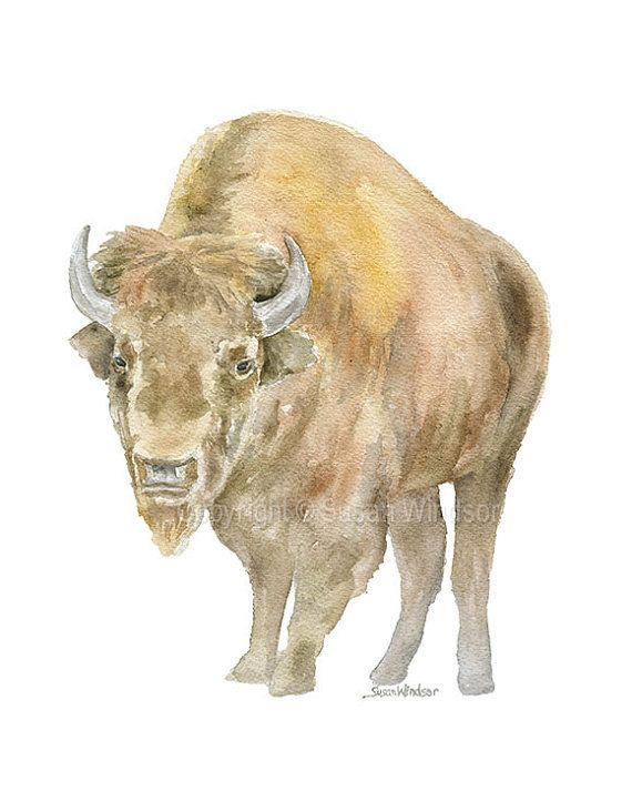 Bison Watercolor Painting 8x10 8 5x11 Fine Art Western Art By