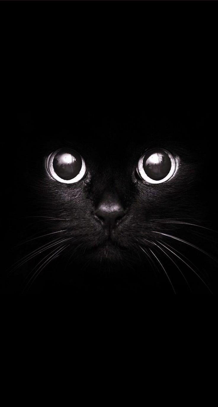 Best Black Mobile Phone Wallpaper In 2020 Cat Wallpaper Animal Wallpaper Iphone Wallpaper Hipster