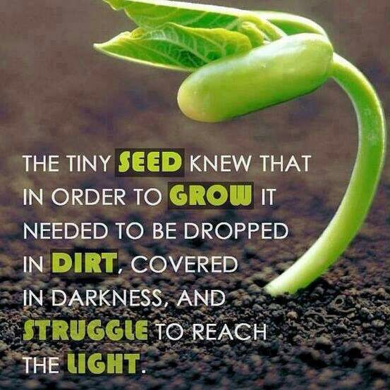 Growth From Small Seeds To Mighty Trees Quotes Seed Quotes