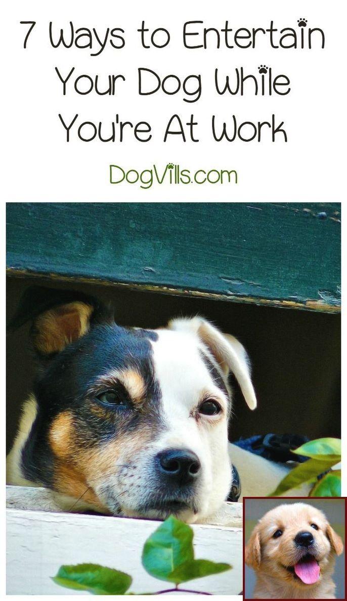 Dog Behavior Quiz And Clicker Training Shelter Dogs Benji