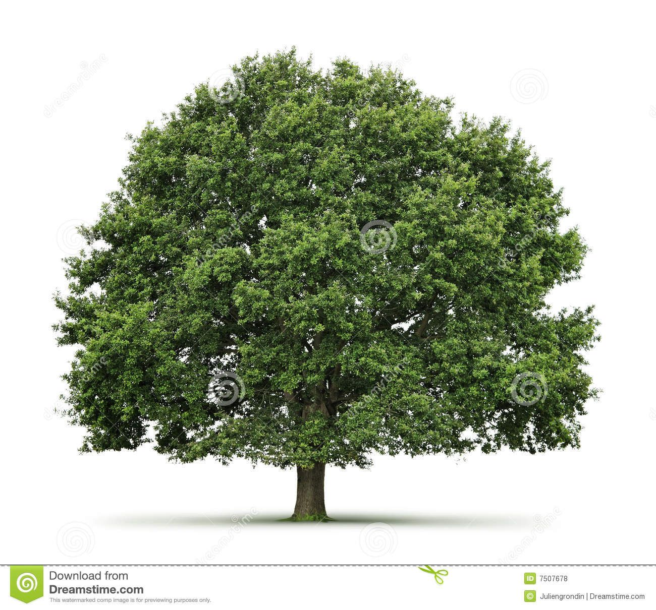 oak Tree | Puppet Ideas: Tree Plays | Pinterest | Oak tree