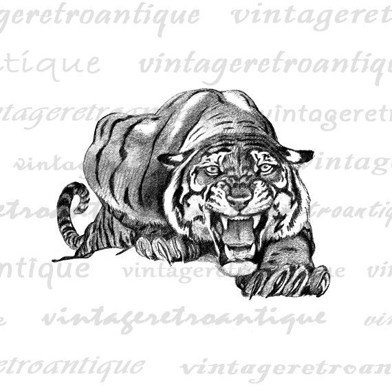 BOGO SALE Tiger Stalking Digital Image Download Printable Graphic Vintage Clip Art for Transfers Printing etc HQ 300dpi No.182. $3.50, via Etsy.