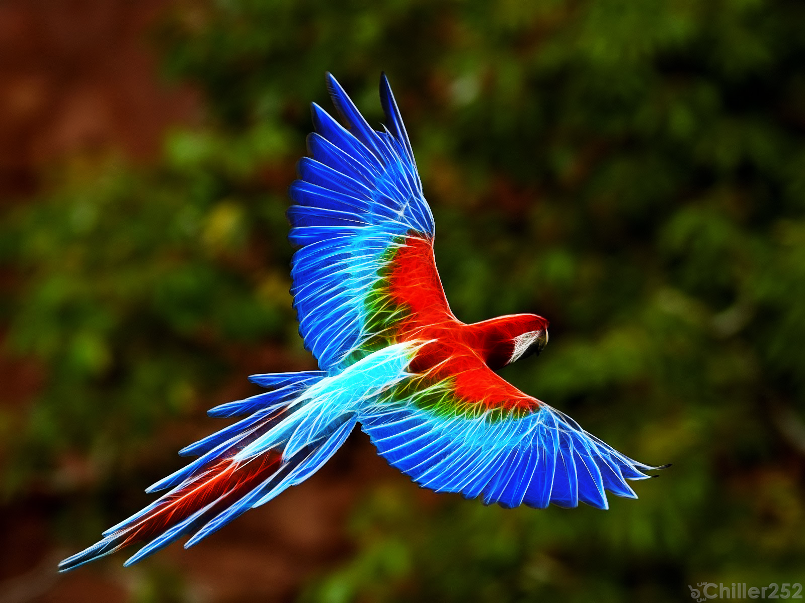 Colorful Bird Hd Wide Wallpaper For Widescreen Wallpapers) Hd Wallpapers
