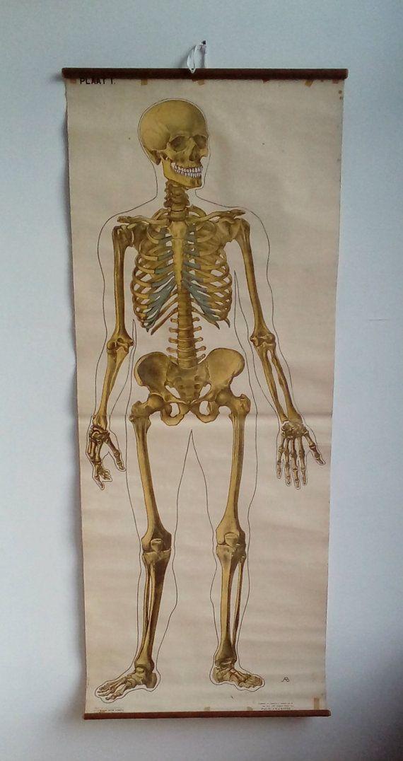 Skeleton Chart Large Anatomy Poster Axial Skeleton Medical