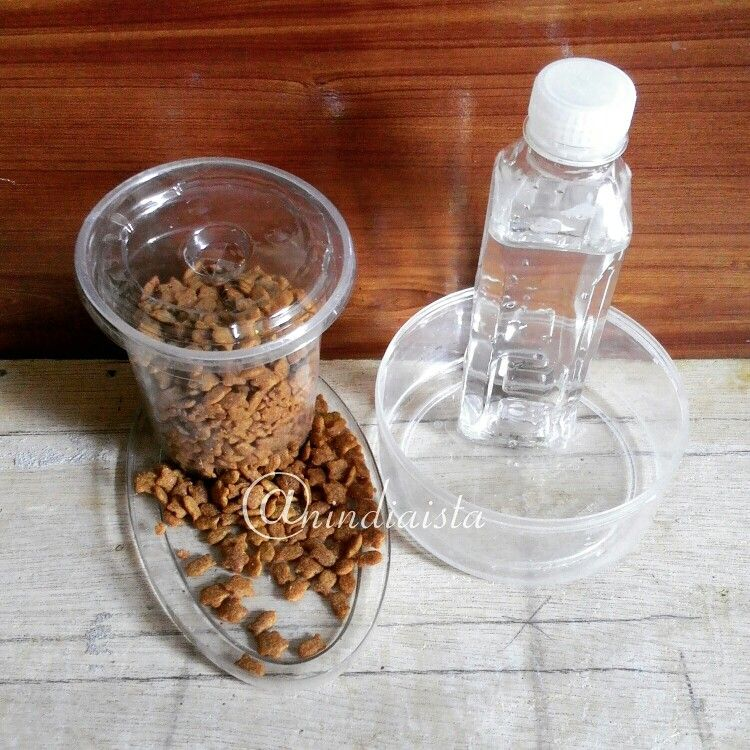 Food Dispenser And Water Dispenser For Cat Diy Recycle