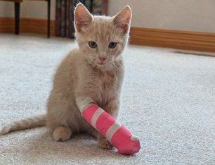 Even Pets Sometimes Need Casts Pets Cat Paws Cats