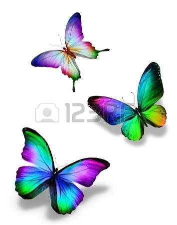 Bright Rainbow Colors Black Three Color Butterflies Isolated On