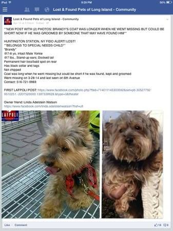 Lost Yorkie Huntington Station Please Help Somebody Has This Pup Probably Not Knowing That He Belongs To A Special Needs Child Wh Losing A Dog Dogs Yorkie