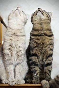 Cats Are Looking Up