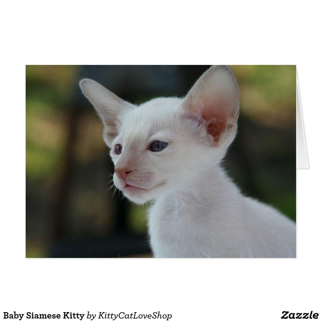 How to Get Rid of Fleas Cat fleas, Fleas on kittens, Dog
