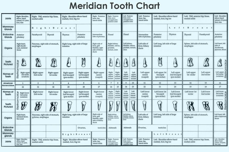 Dental Meridian Tooth Chart what you don\u0027t know Pinterest