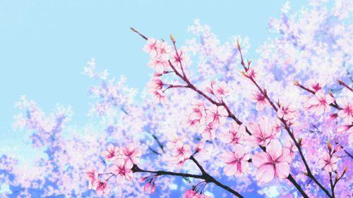 Image via We Heart It animated #animation #cherryblossom #gif - cherry blossom animated