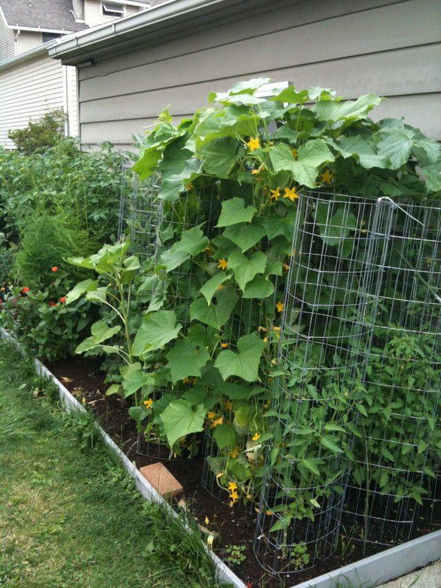 Vertical gardening vegetable gardening forum gardenweb for Ideas for growing vegetables