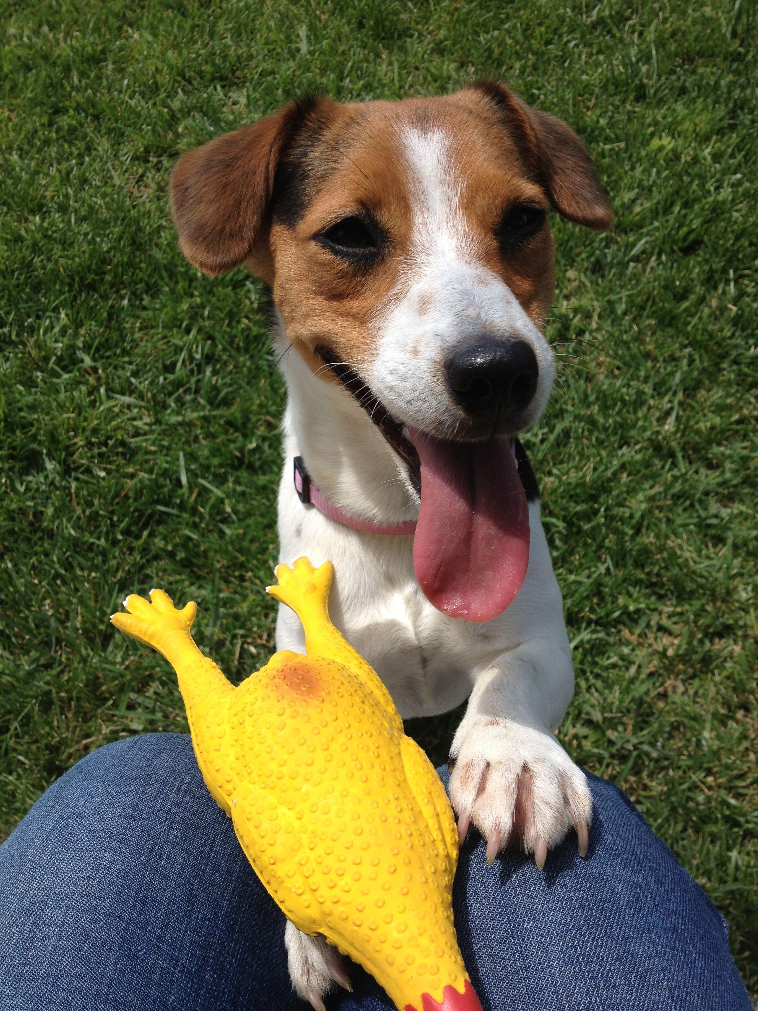 Margherita, cagnolina di Patrizia, è un'amica di Pet's Planet! #dog with #cicken #funny