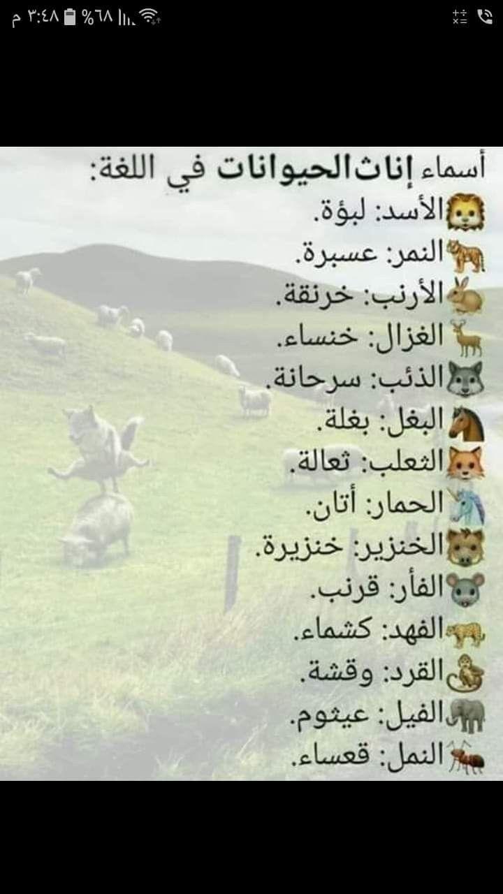 Pin By غضبة مطر On لغةعربية Learn Arabic Alphabet Learn Arabic Language Learning Arabic