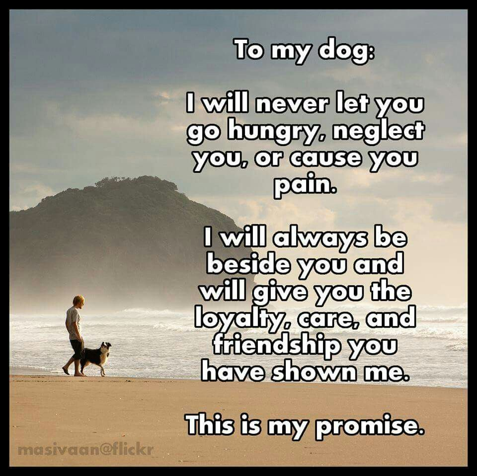 Quotes About Dog Friendship This Is My Promise  Dogs  Pinterest  Labs Dog And Animal