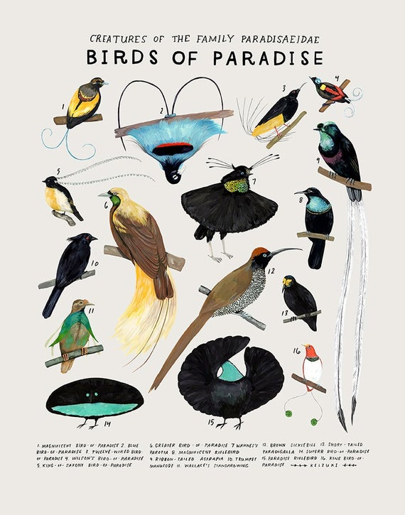 birds of paradise Google Search in 2020 Birds of