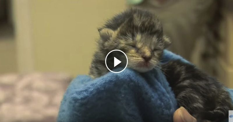 Video How To Raise Just Born Kittens Baby Kittens Kittens Cute Cats Photos