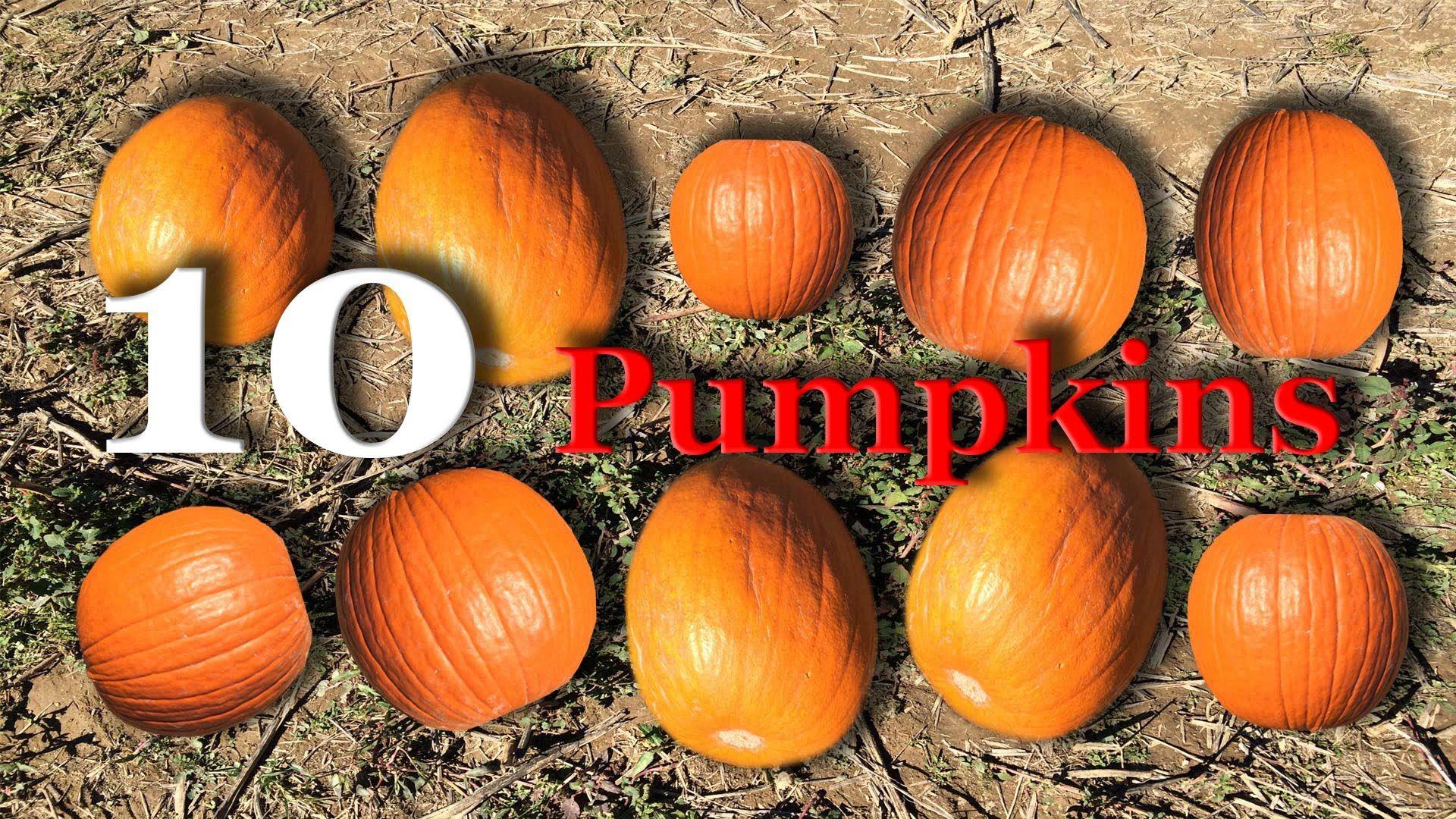 Counting 1 10 Pumpkins