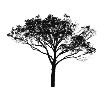 Png Black And White Tree Black And White Tree Vector Trees Tree Images