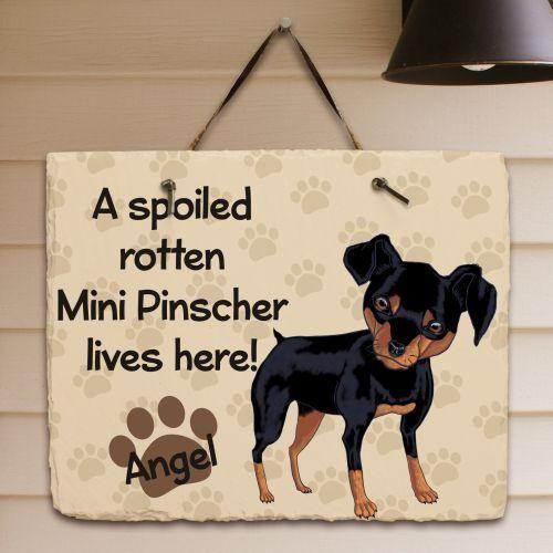 Miniature Pinscher Dog Fridge Magnet  A VERY SPOILT MIN PIN LIVES HERE