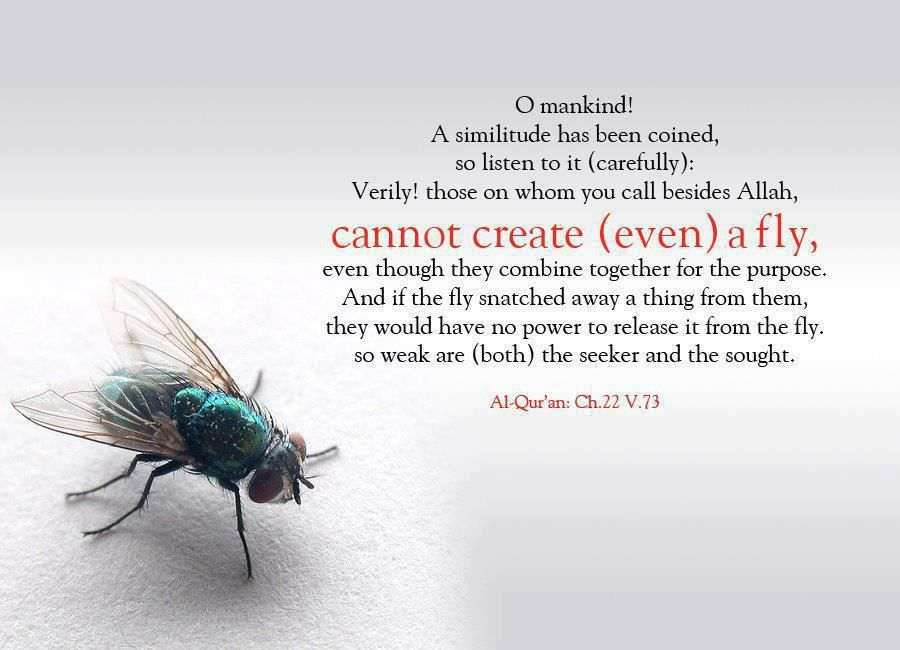Even a Fly (Quran 22:73; Surat al-Haj) O mankind! A similitude has been coined, so listen to it (carefully): Verily! Those on whom you call besides Allah, cannot create (even) a fly, even though they combine together for the purpose. And if they fly snatched away a thing from them, they would have no power to release it from the fly, so weak are (both) the seeker and the sought. Al-Qur'an: Ch. 22 V. 73