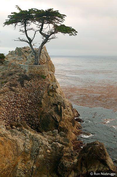 Lone Cypress 17 Mile Drive Monterey Ca Monterey Peninsula Beautiful Places To Visit California Travel