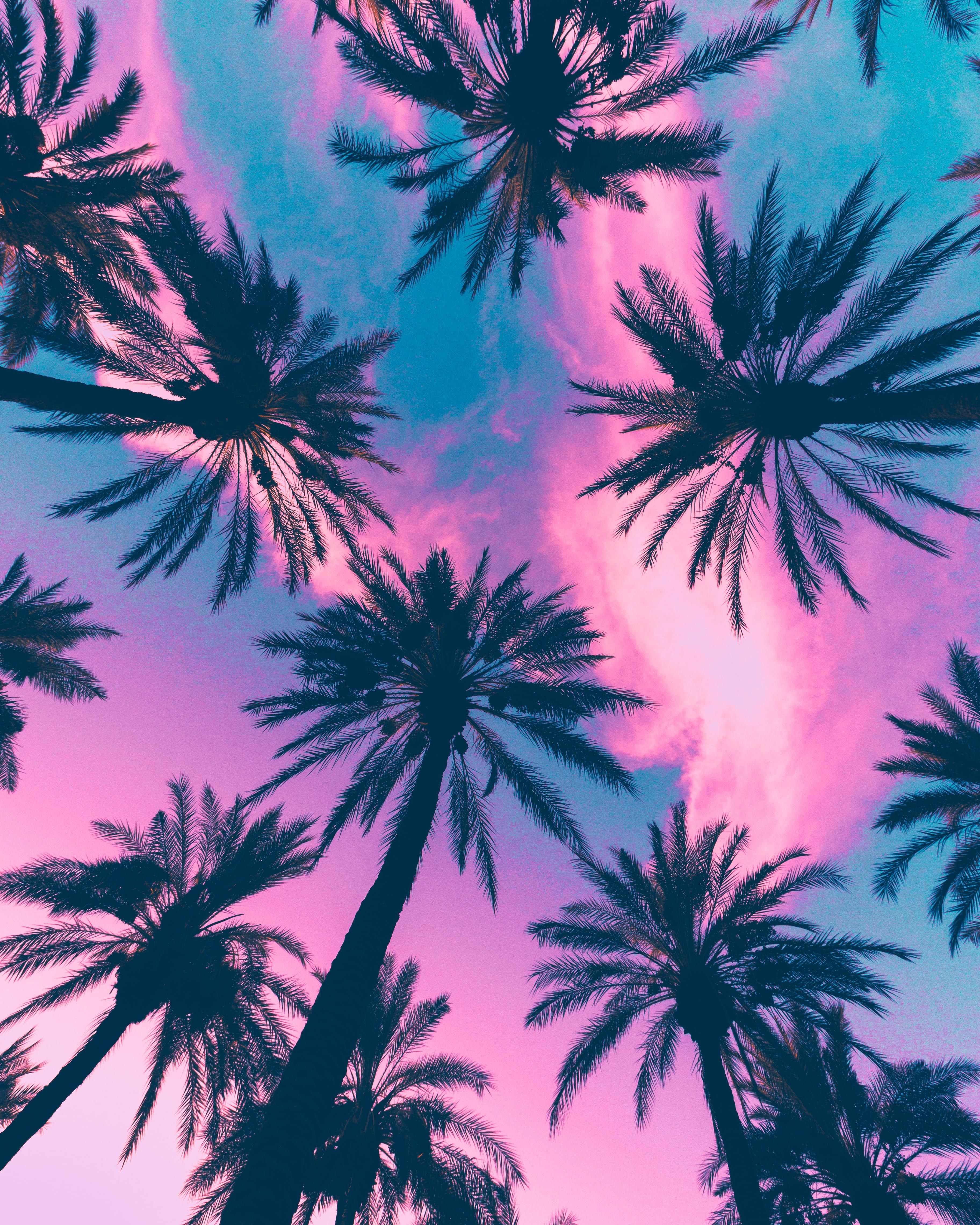 Palm Trees Aesthetic Leaves