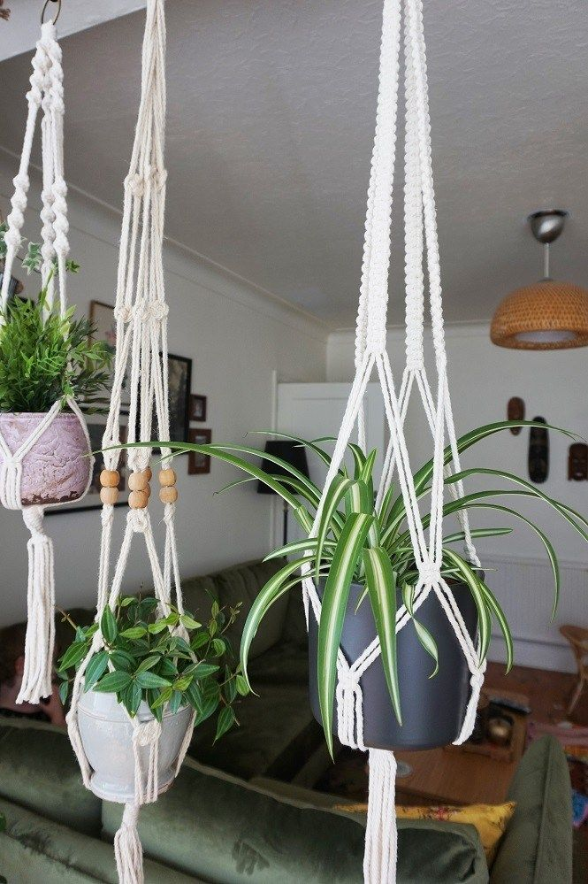 account suspended  hang plants from ceiling bedroom