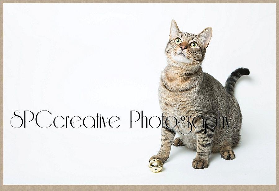 This sweet kitten in Katy, TX needa home click through