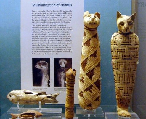 british museum london egyptian exhibition-Mummification of animals.