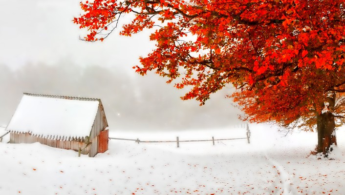Photo of Autumn and winter wallpaper
