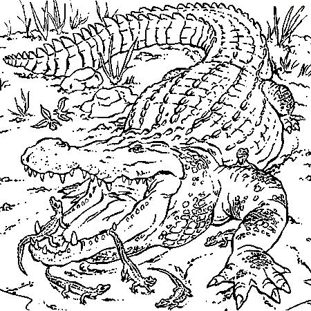 Dessin crocodiles a colorier fire of bird pinterest - Image crocodile dessin ...
