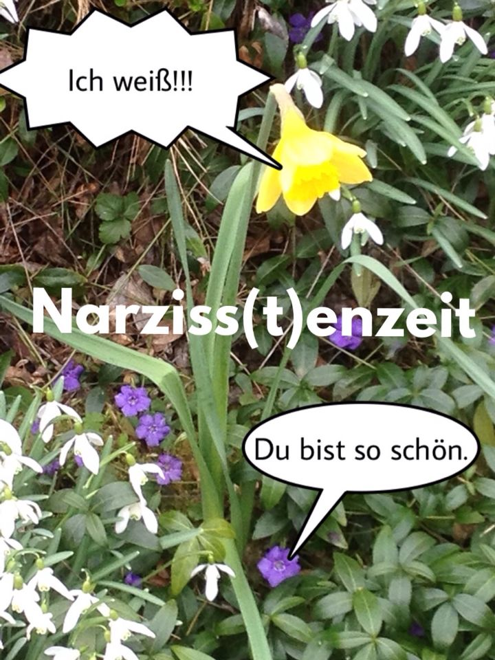 Narziss(t)enzeit #Witzig #lustig #Spruch #Humor #Fun #Narzisst #Narzisse #Osterblume