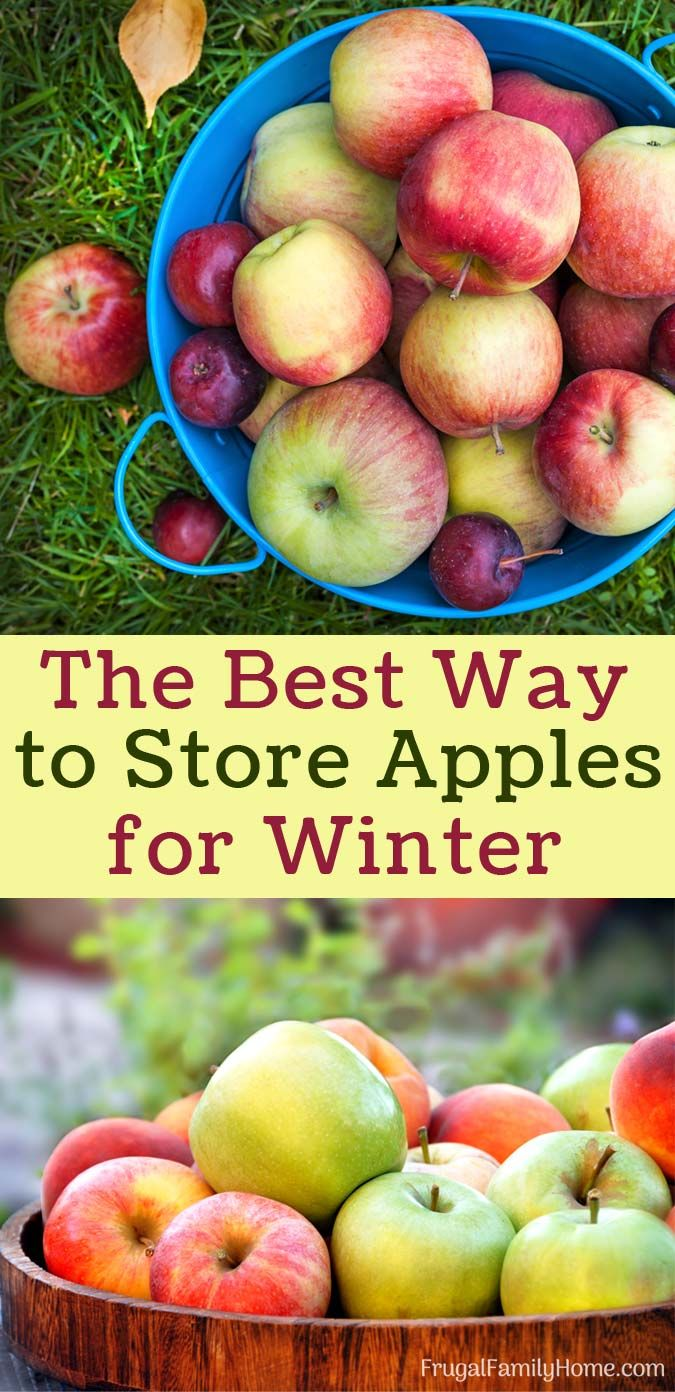 How to keep apples for the winter 31