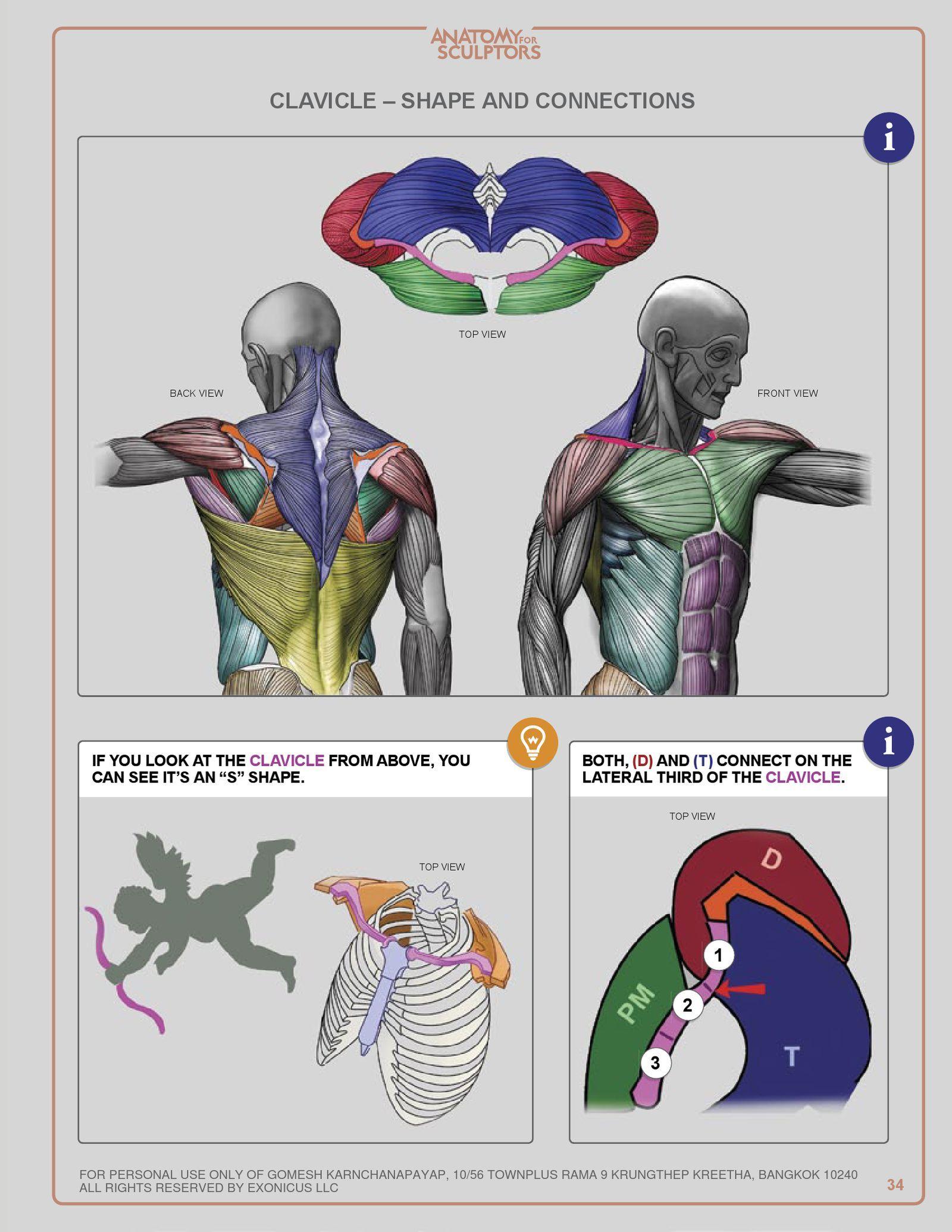 ANATOMY FOR SCULPTORS | PDF to Flipbook | Anatomy ...