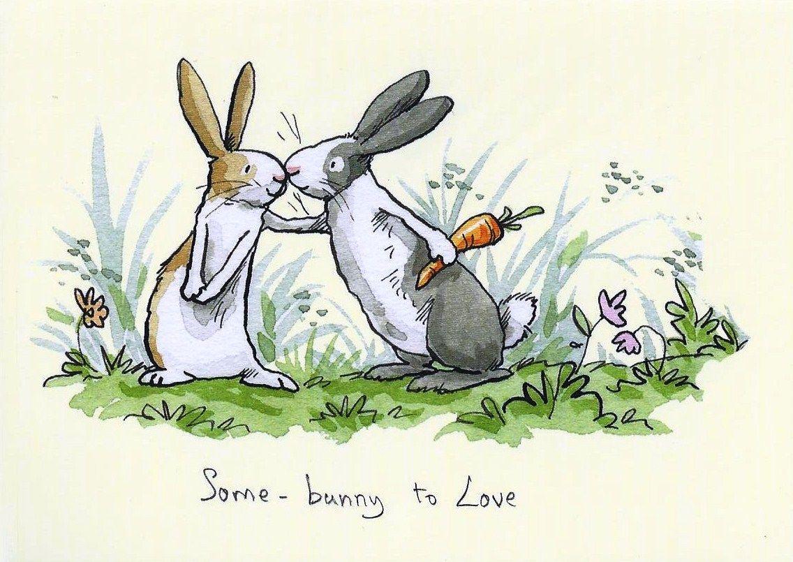 Енотом, прикольные открытки зайцами