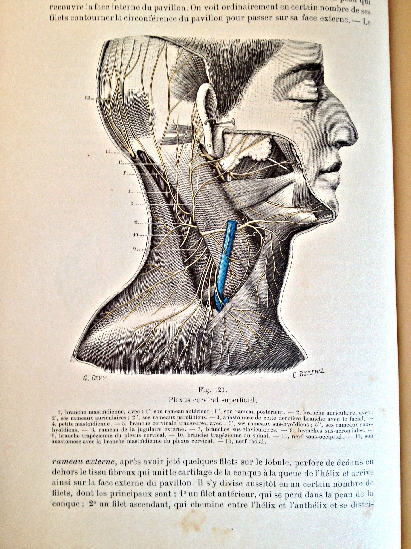 Antique Human Anatomy book French book Rare collectible book Medical ...