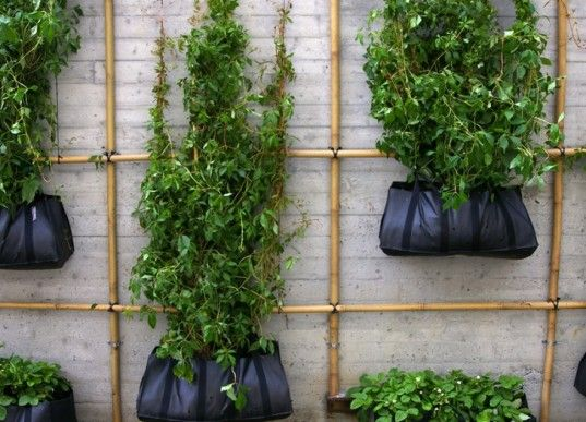Climbing Green Wall Crafted From Bamboo Scaffolding & Hanging Bags
