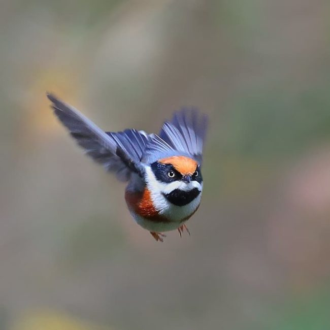 This Bird Is Called The BlackThroated Bushtit And Yes