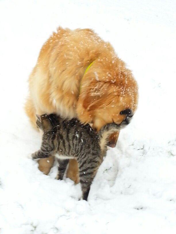 Beste Freunde Kuscheln Wenn Es Schneit Beste Freundin Kuscheln Freunde