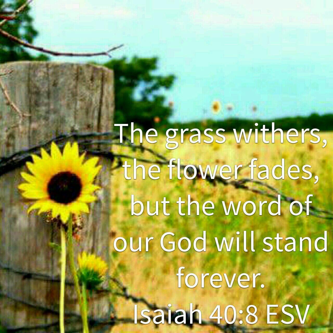 Isaiah 40 8 Esv
