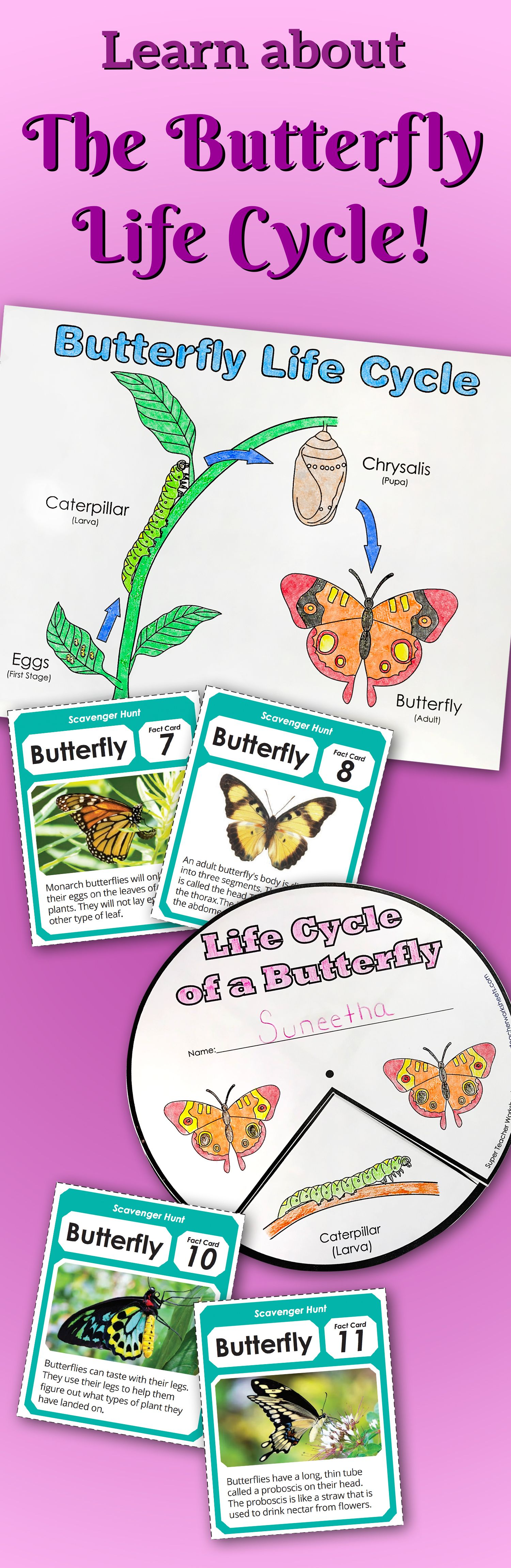 Learn All About The Butterflylifecycle With Fun Printable