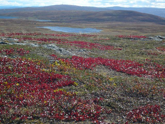 Colori d'autunno in Norvegia :D