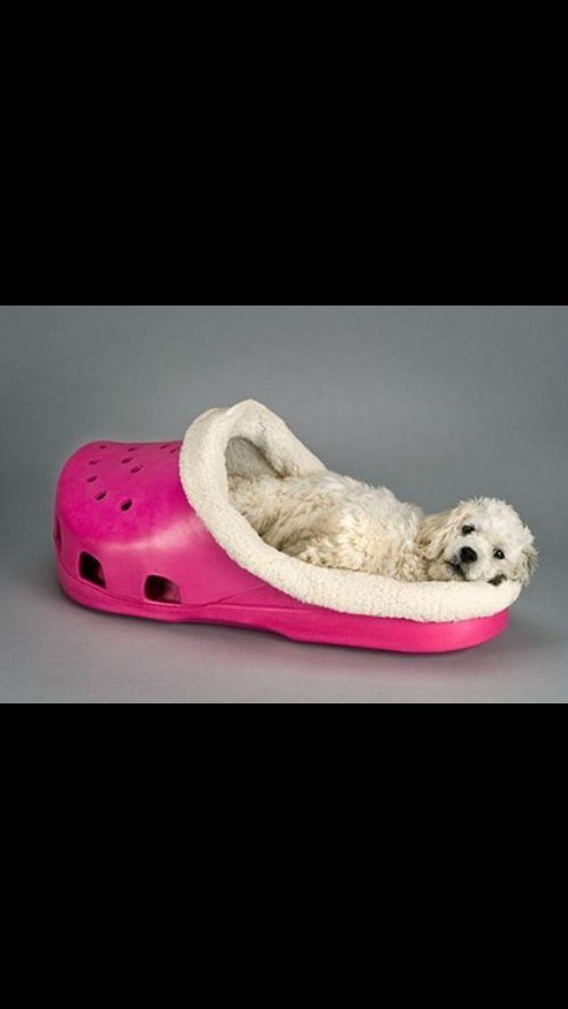 Maltipoo Dogs Cute Stylish Dog Beds Designer Dog Beds Fancy Dog Beds