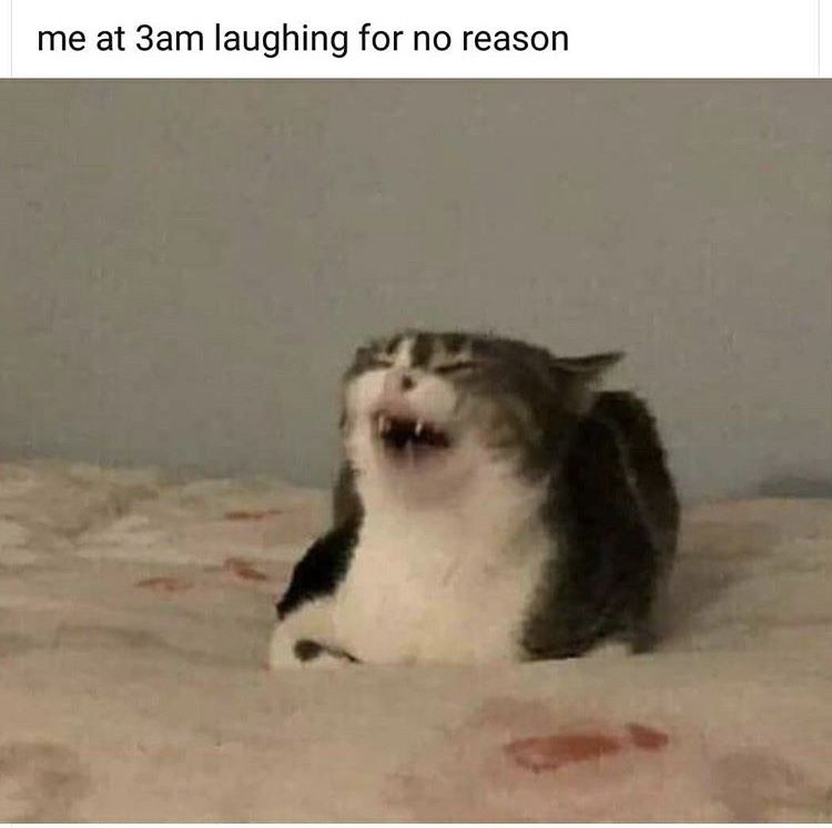 Pin By Heather Bartman On Humor Relatable Funny Memes Funny Spanish Memes Stupid Memes