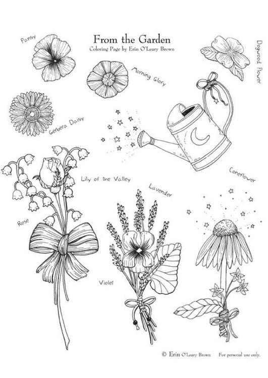 Malvorlage Aus Dem Garten Ausmalbild 5998 Malvorlagen Ausmalen Gartenbilder