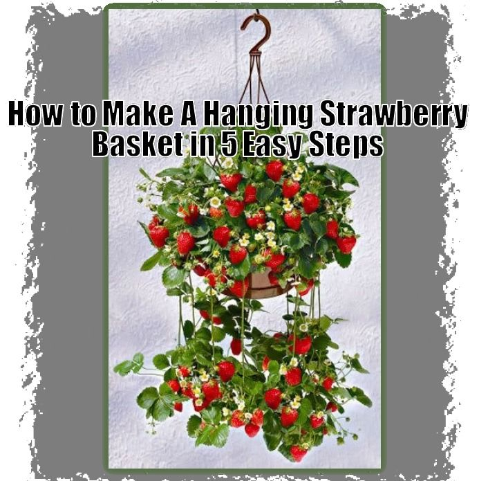 How To Make A Hanging Strawberry Basket In 5 Easy Steps Happy