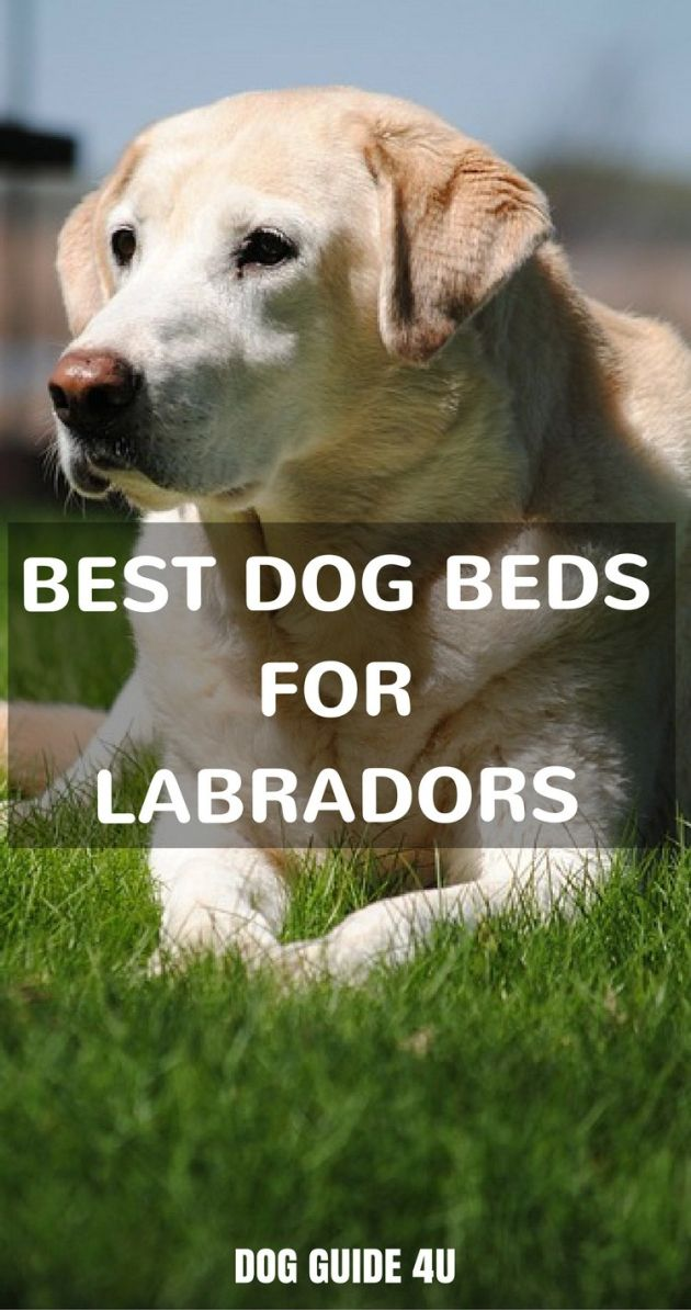 Best Dog Beds for Labs Large Log Beds largedogbeds