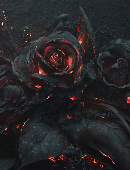 8ad848d23b16f rose, black, and fire image | Robert's Rebellion: Aesthetic (GOT ...